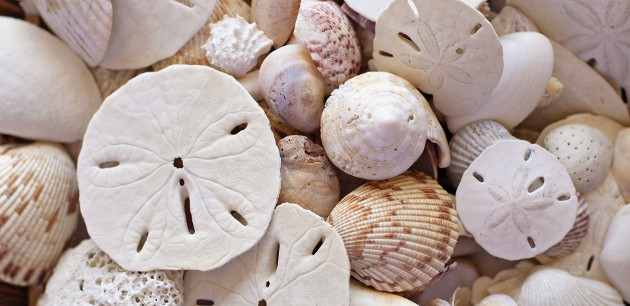Title Company in Palm Harbor | Sand Dollars and Sea Shells