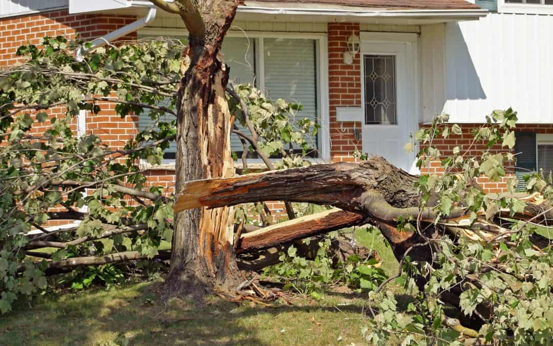 5 Tips If A Storm Damages Your Home